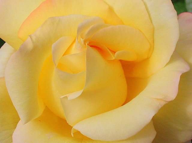 rosas (Zeltia)