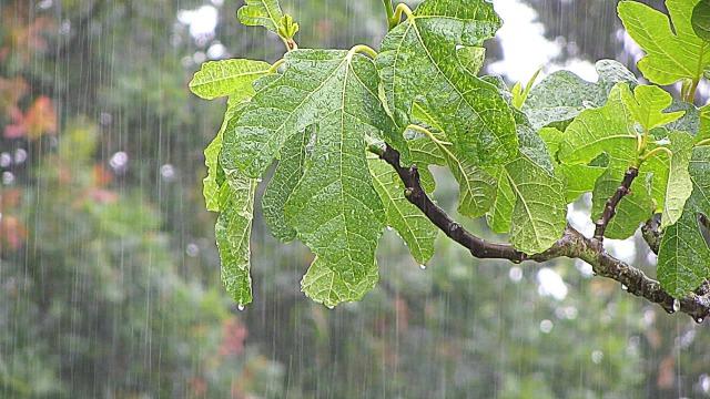 chovendo no meu macondo