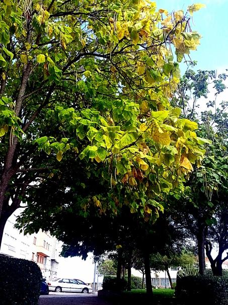 árbores urbanitas